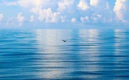 Seevogelschattenbild Stockfotos