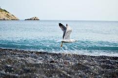 Seevogelstart Lizenzfreie Stockfotos