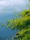 Seewasser mit grünem Gras Lizenzfreies Stockbild