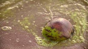 Seewelle mit Kokosnuss auf Strand und Algenblüte herein stock video footage