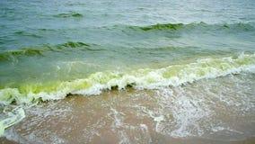 Seewelle und Algenblüte im Meer stock video footage