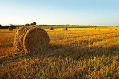 Segado por campos de trigo e por balas de feno Imagem de Stock Royalty Free