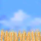 Segale sul cielo del fondo illustrazione vettoriale