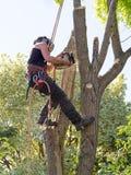 Segando giù un albero Fotografia Stock