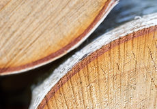 Segato sull'albero, primo piano di strato del sughero Immagini Stock