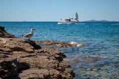 Segelbåt och fiskmås på sjögångarna, vanlig plats på Adriatiska havet s Arkivfoton