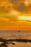 Segelboot, das an der Dämmerung mit einigen Seemöwen im Vordergrund verlässt Lizenzfreies Stockfoto