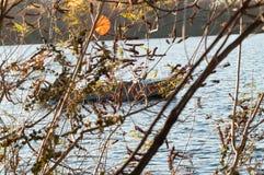 Segelboot im Wasser Lizenzfreies Stockfoto