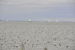 Segelboote auf dem IJselmeer, Marken die Niederlande Stockfoto