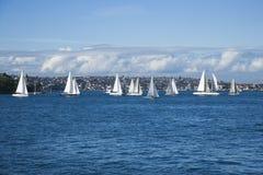 Segelboote, Sydney, Australien. stockfotografie