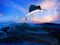 Segelfisch, der über blauen Seeozeangebrauch für Meeresflora und -fauna und schöne Wassernatur fliegt Lizenzfreie Stockfotografie