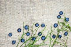 Segeltuch mit Blaubeeren und den Zweigen Stockbild
