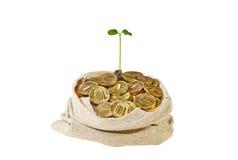 Segeltuchtasche voll mit Goldmünzen und einem leichten grünen Sprössling Lizenzfreie Stockfotografie