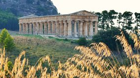 Segesta Temple Sicily Italy. Segesta ancient Temple Sicily Italy view stock video footage