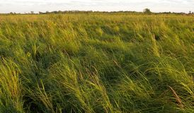 Segge-Wiesen-Sumpfgebiet Lizenzfreie Stockfotos