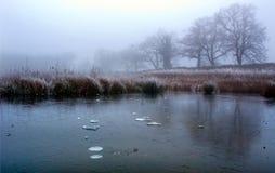 Segherie perse Raod della riserva naturale di Diss Norfolk immagini stock
