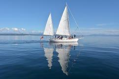 Segla fartyget som seglar över sjön Taupo Nya Zeeland Arkivfoto