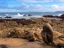 Segla utmed kusten av Dead i Galicia Royaltyfri Bild
