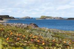 Segla utmed kusten av det Barents havet Fotografering för Bildbyråer