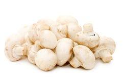 Segment de mémoire de de champignon de paris de champignon de couche Images stock