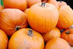 Segment de mémoire de grands potirons oranges Images libres de droits