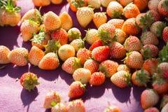 Segment de mémoire des fraises fraîches images libres de droits