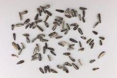 Segment de mémoire des graines de tournesol Images stock