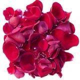 Segment de mémoire des pétales roses rouges brillants Image libre de droits