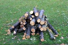 Segment de mémoire en bois sur l'herbe Images stock