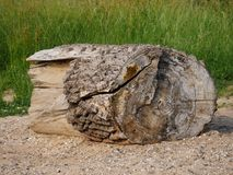 Segment eines Baumstammes, wie Treibholz, teils mit Barke, das heftige Holz angeschwemmt, lang gelegen im Wasser, unscharfer Hint stockbild
