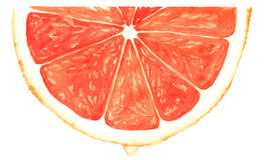 Free Segment Of Red Grapefruit Stock Images - 64818714