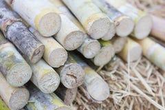 Segment of sugar cane. Close up of Segment of sugar cane royalty free stock images