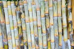 Segment of sugar cane. Close up of Segment of sugar cane royalty free stock image