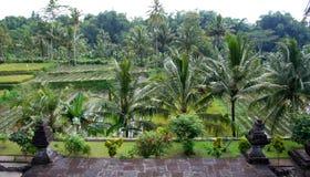 Segment tropical de forêt, Java-Orientale, Indonésie Photos stock