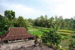 Segment tropical de forêt, Java-Orientale, Indonésie Image stock