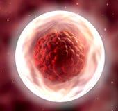 Segmentação do embrião ilustração do vetor