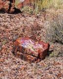 Segmento di legno petrificato del ceppo sul letto di piccoli trucioli petrificati Fotografia Stock Libera da Diritti