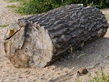Segmento di un tronco di albero, come legname galleggiante, incagliato, parzialmente con la corteccia, il legno lacerato, lungame fotografie stock libere da diritti