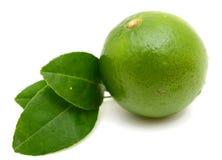 Segmento do fruto do cal do citrino Foto de Stock