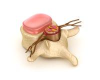 Segmento espinal com um disco ilustração do vetor