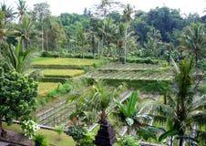 Segmento tropicale della foresta Fotografia Stock Libera da Diritti
