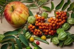 Segmentos da cinza de montanha, fruto, bagas, grande maçã fotos de stock royalty free