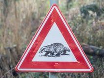 Segnale di pericolo d'attraversamento del tasso dal lato di una strada campestre rurale immagini stock