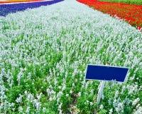 Segnale stradale in bianco in mezzo di un mare dei fiori Fotografia Stock