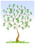 Segni del dollaro dei contanti dell'albero dei soldi Fotografia Stock Libera da Diritti