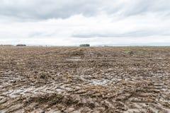 Segni del trattore e fango ad un acro bagnato, Baviera, Germania Fotografia Stock