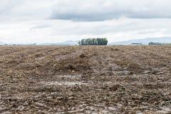 Segni del trattore e fango ad un acro bagnato, Baviera, Germania Immagini Stock
