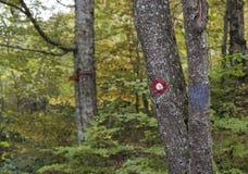 Segni dell'albero dell'obiettivo fotografie stock