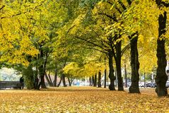 Segni dell'autunno che vengono con le suoi foglie cadenti e colori gialli Fotografie Stock