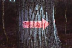 Segni della foresta Immagini Stock Libere da Diritti